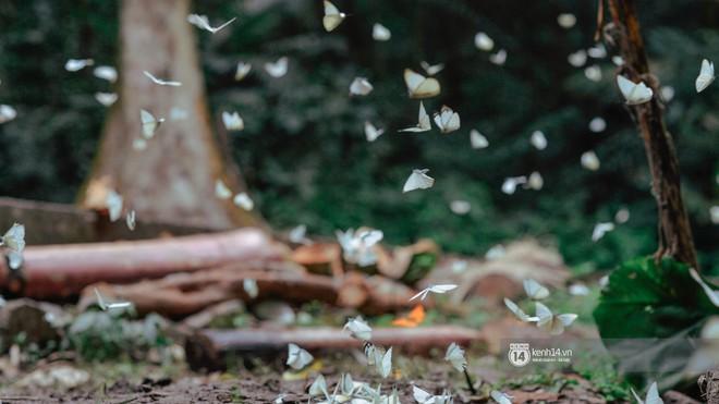 Chuyến đi Cúc Phương những ngày cuối mùa bướm rừng: Chốn thần tiên có vẻ đẹp riêng của sự muộn màng - Ảnh 6.