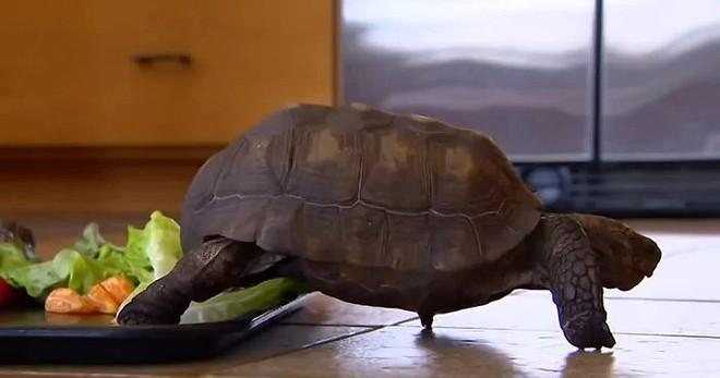 Tình bạn cảm động suốt 57 năm đằng đẵng của người phụ nữ và thú cưng đặc biệt - một cụ rùa - Ảnh 5.