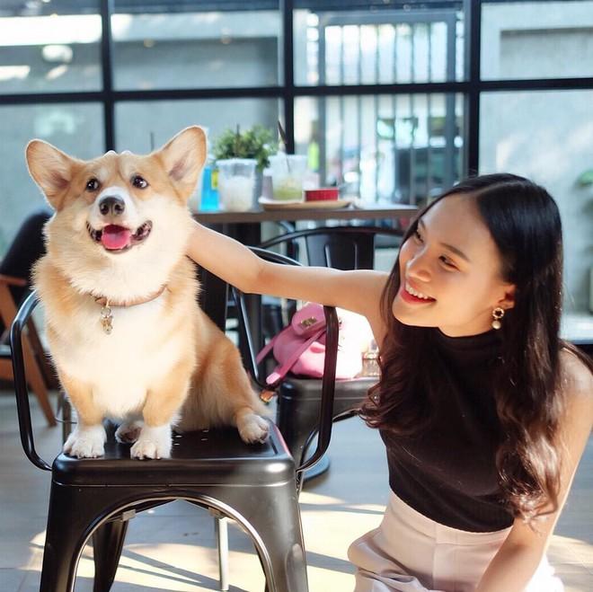 Siêu cấp dễ thương: Quán cà phê chó corgi nổi tiếng nhất Bangkok khiến dân tình phát sốt, con nào con nấy cũng ú nu ú nần - Ảnh 3.