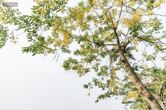Chùm ảnh: Hà Nội và bản tình ca của những loài hoa mùa hạ thay nhau khoe sắc trên phố - Ảnh 17.