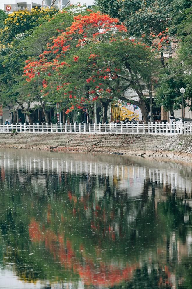 Chùm ảnh: Hà Nội và bản tình ca của những loài hoa mùa hạ thay nhau khoe sắc trên phố - Ảnh 4.
