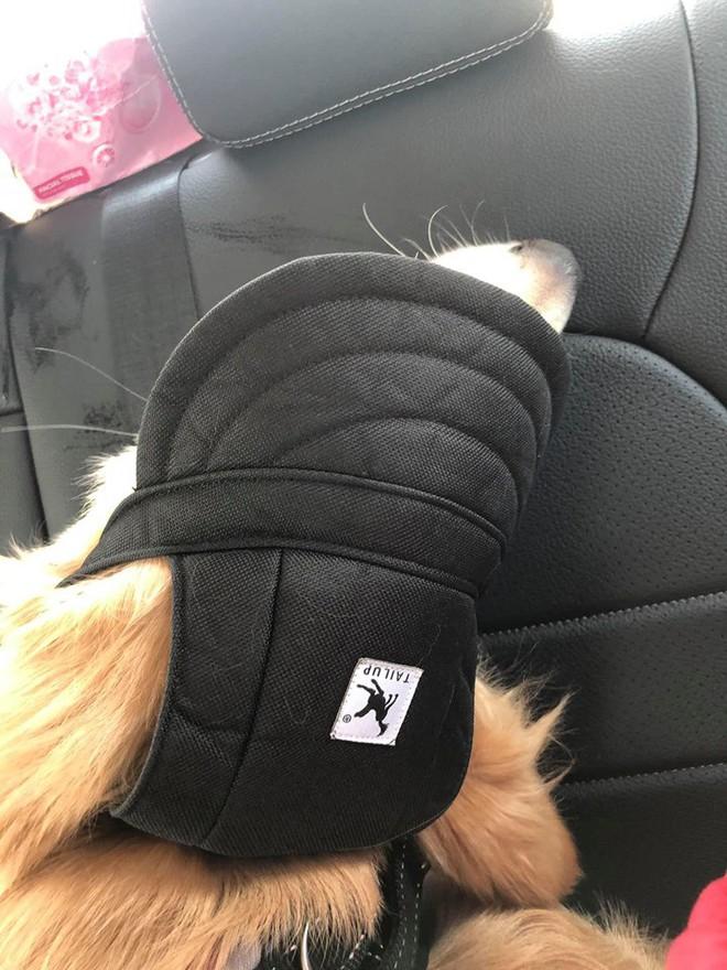 Chú chó đốn tim cư dân mạng bởi loạt biểu cảm nói hộ nỗi lòng của những người... say xe khi đi du lịch - Ảnh 13.