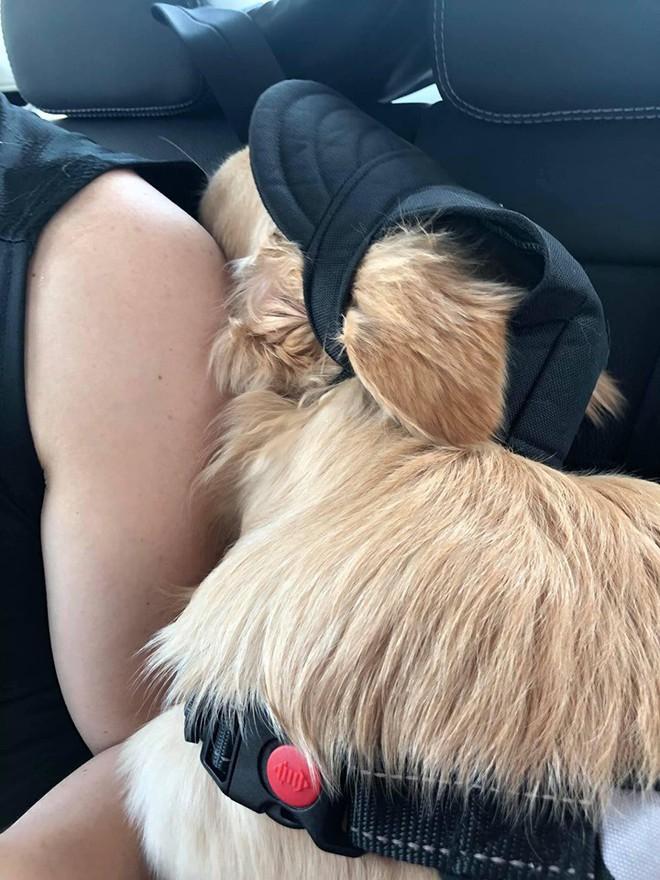Chú chó đốn tim cư dân mạng bởi loạt biểu cảm nói hộ nỗi lòng của những người... say xe khi đi du lịch - Ảnh 11.