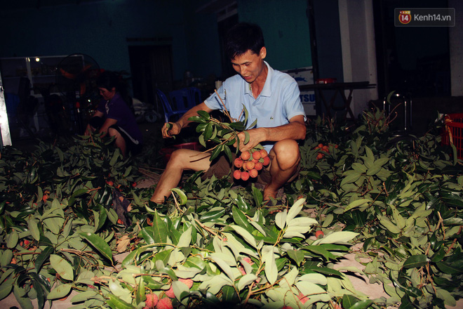 Người dân Bắc Giang dậy từ 3 giờ sáng để bẻ vải, thức xuyên đêm vặt lá cho kịp thời vụ - Ảnh 3.