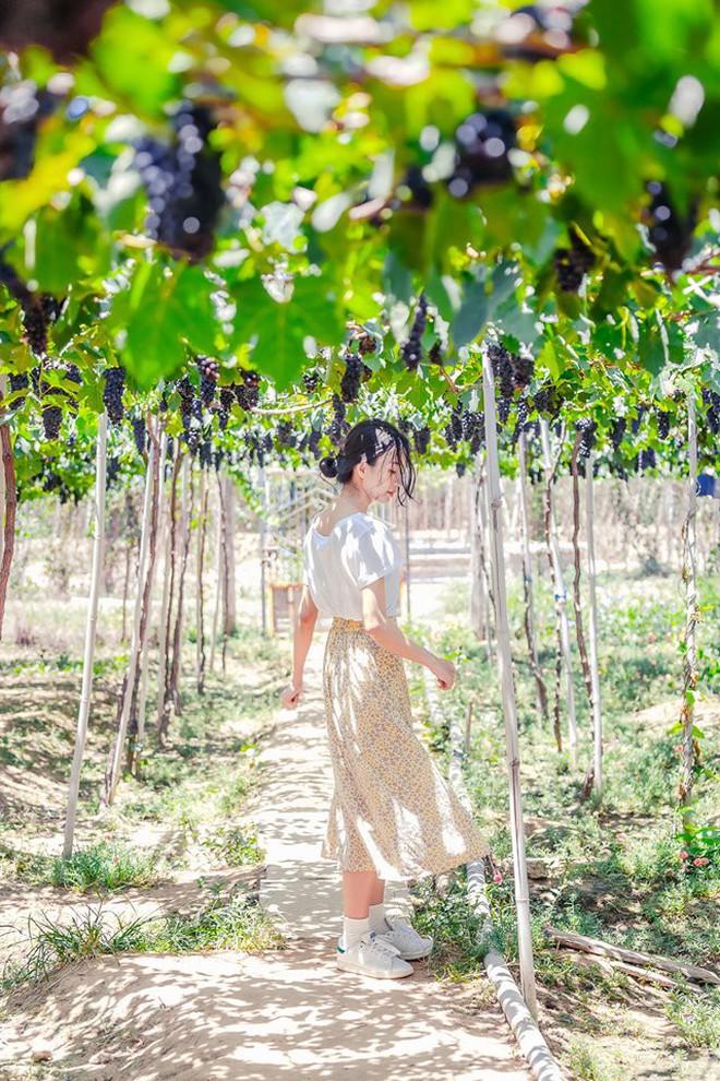 """Cánh đồng quạt gió và vườn nho Ba Mọi tại Ninh Thuận: Hai địa điểm check-in """"siêu to khổng lồ"""", lại còn miễn phí nữa chứ! - Ảnh 7."""