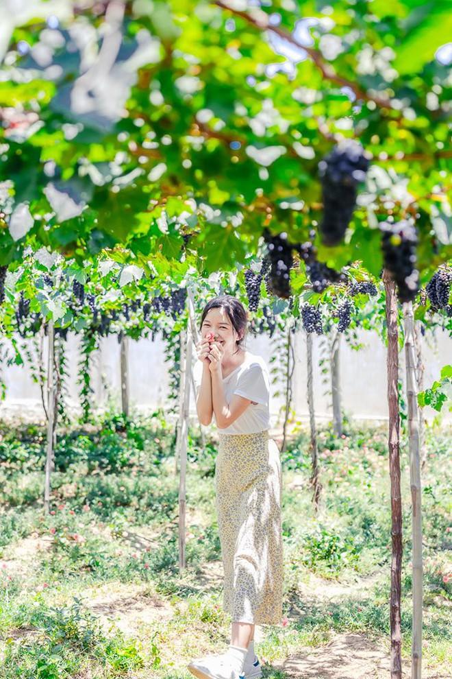 """Cánh đồng quạt gió và vườn nho Ba Mọi tại Ninh Thuận: Hai địa điểm check-in """"siêu to khổng lồ"""", lại còn miễn phí nữa chứ! - Ảnh 8."""