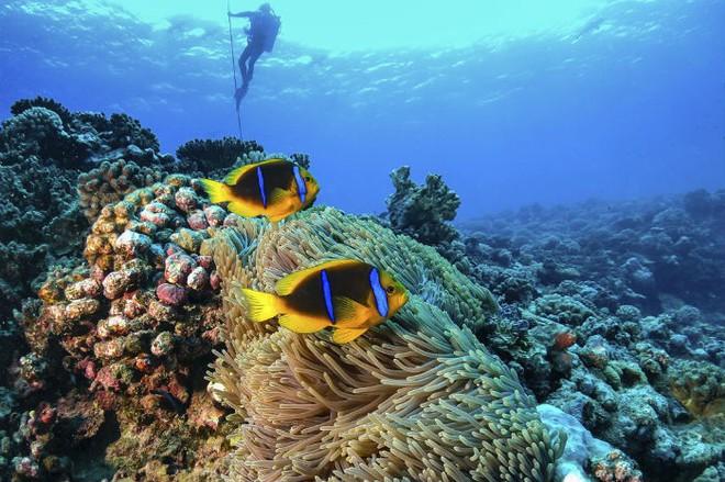 Vượt qua cả Bali và Hawaii, ốc đảo hình giọt nước kỳ lạ ở Philippines được tạp chí Mỹ bình chọn đẹp nhất thế giới - Ảnh 23.