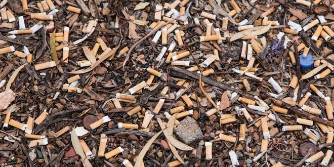 Cây cỏ trên thế giới đang chết dần chết mòn vì 4,5 NGHÌN TỈ đầu lọc thuốc lá xuất hiện mỗi năm - Ảnh 1.