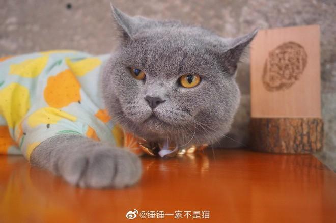 Ra phố tập thể dục giảm cân như chị em, chú mèo 2 tuổi bỗng được già trẻ lớn bé thi nhau săn đón hệt như ngôi sao nổi tiếng - Ảnh 7.