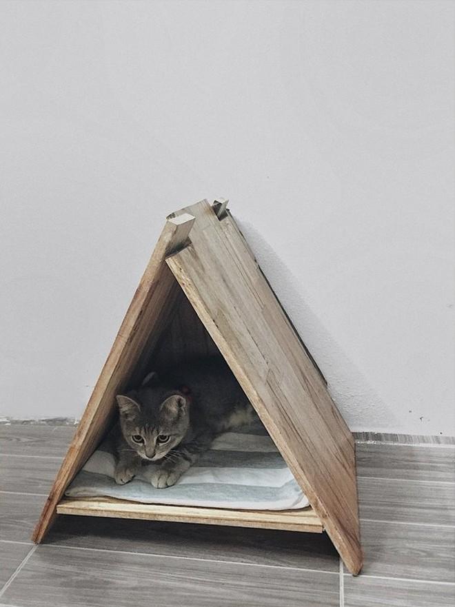 Nam thanh niên trang trí phòng trọ đẹp như studio, tự tay đóng đồ gỗ và nuôi mèo béo ú khiến mọi cô gái trầm trồ - Ảnh 7.