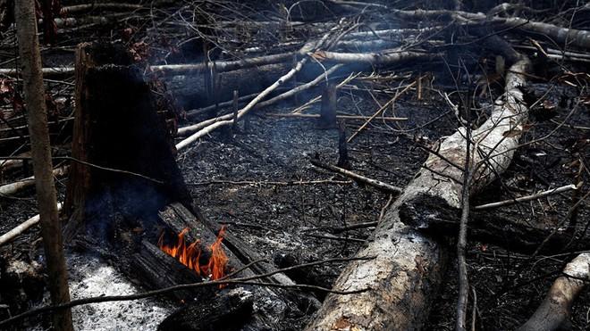 5 cách giải cứu rừng Amazon từ Quỹ Quốc tế Bảo vệ Thiên nhiên WWF: Hãy đọc ngay để biết bạn nên làm gì lúc này - Ảnh 2.