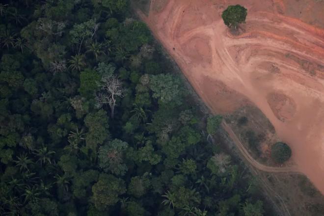 Cái kết của một hành tinh nếu rừng Amazon biến mất: Đừng nói cứu thế giới, bạn đang tự cứu chính mình mà thôi! - Ảnh 1.