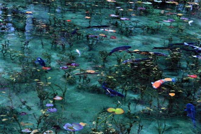 Trầm trồ trước hồ đẹp như tranh sơn dầu ở Nhật Bản - ảnh 5