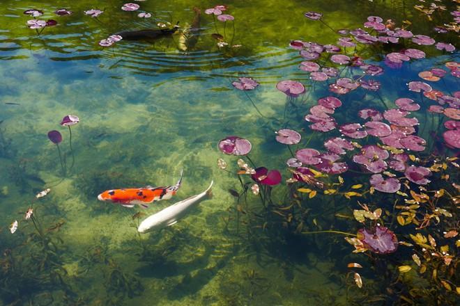 Trầm trồ trước hồ đẹp như tranh sơn dầu ở Nhật Bản - ảnh 8