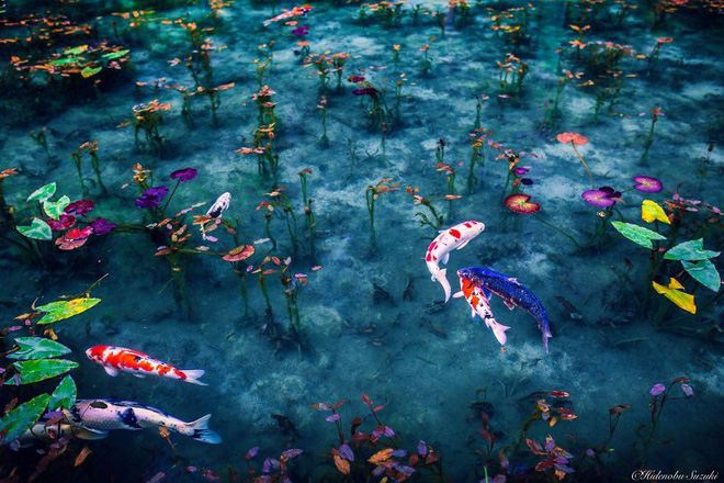 Trầm trồ trước hồ đẹp như tranh sơn dầu ở Nhật Bản - ảnh 9