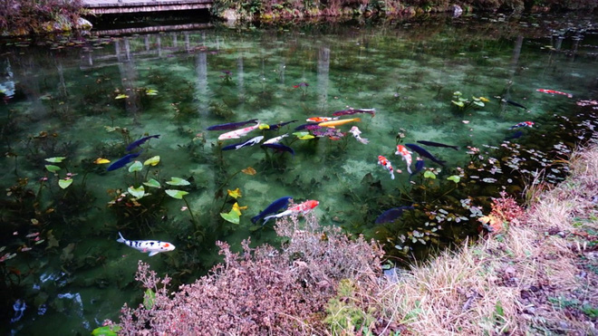 Trầm trồ trước hồ đẹp như tranh sơn dầu ở Nhật Bản - ảnh 7