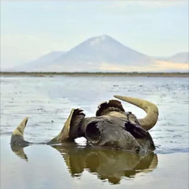 4 hồ nước bí ẩn nhất thế giới: Cái mơ mộng nên thơ, nơi ẩn chứa hàng trăm bộ xương người rùng rợn Ho-natron-1569386907388559463276