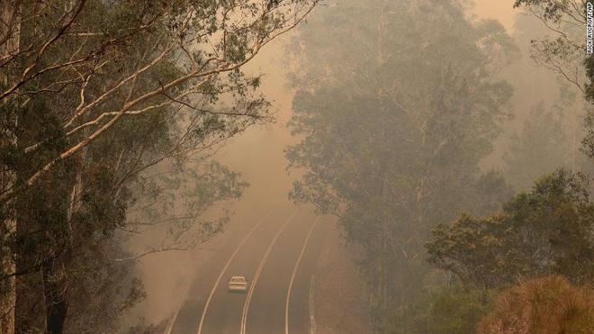 """Gần NỬA TỈ sinh vật bị thiêu rụi, 1/3 số gấu koala chết cháy: Úc đang trải qua trận cháy rừng """"đại thảm họa"""" thực sự mà chưa nhìn thấy lối thoát - Ảnh 2."""