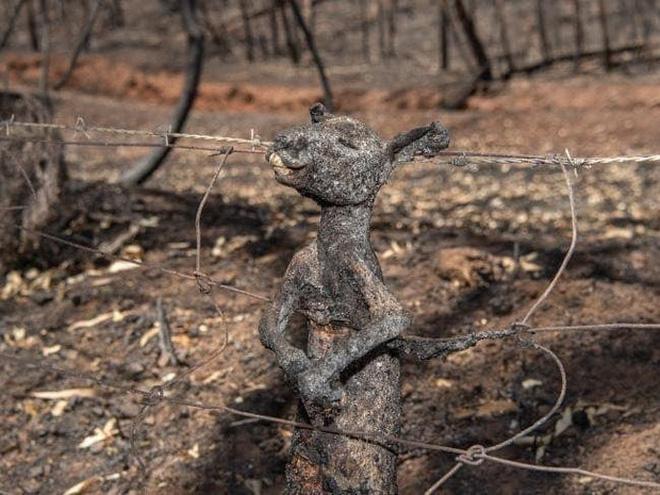 Đại thảm họa cháy rừng Úc nhìn từ không gian: Cả nước như quả cầu lửa, những mảng xanh trù phú bị thay bằng màu khói trắng tang thương - Ảnh 22.