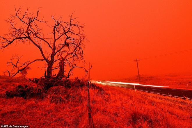 Đại thảm họa cháy rừng Úc nhìn từ không gian: Cả nước như quả cầu lửa, những mảng xanh trù phú bị thay bằng màu khói trắng tang thương - Ảnh 19.