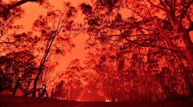 """Gần NỬA TỈ sinh vật bị thiêu rụi, 1/3 số gấu koala chết cháy: Úc đang trải qua trận cháy rừng """"đại thảm họa"""" thực sự mà chưa nhìn thấy lối thoát - Ảnh 4."""