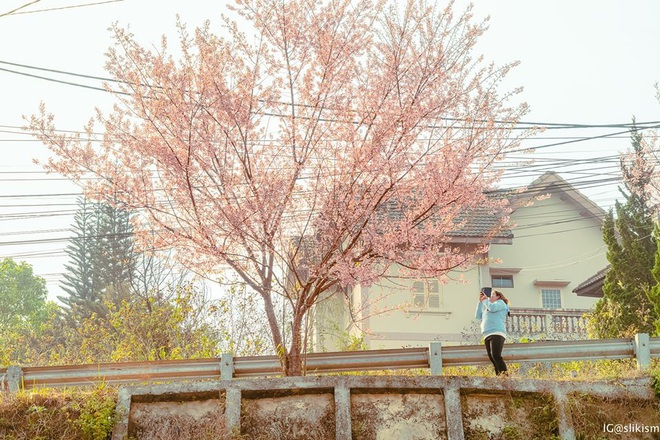 Không tin vào mắt mình đây là bộ ảnh được chụp tại Đà Lạt, nhìn thoáng qua cứ ngỡ như nước Nhật xa xôi! - Ảnh 9.