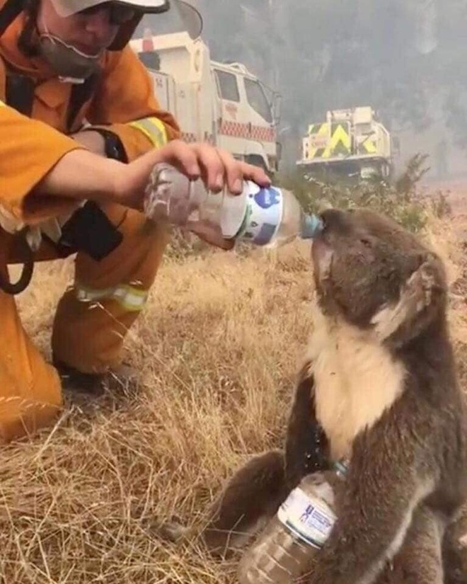 """H'Hen Niê, Hoàng Thuỳ và dàn sao Việt đồng loạt lên tiếng về thảm họa cháy rừng """"địa ngục"""" ở Úc: Xót xa nửa tỷ động vật bị thiêu rụi - Ảnh 11."""