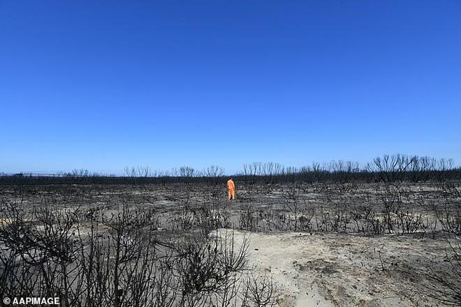 Nước Úc trước và sau th.ảm h.ọa: Cánh rừng xanh mướt đầy sức sống nay chỉ còn là đống tro tàn, mái nhà của Kangaroo b.ị huỷ hoại - Ảnh 2.