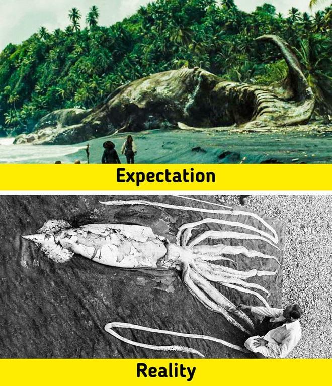 7 sinh vật huyền thoại tưởng chỉ có ở phim ảnh nhưng lại từng làm mưa làm gió Trái Đất trong quá khứ, nàng tiên cá cũng không ngoại lệ - ảnh 1