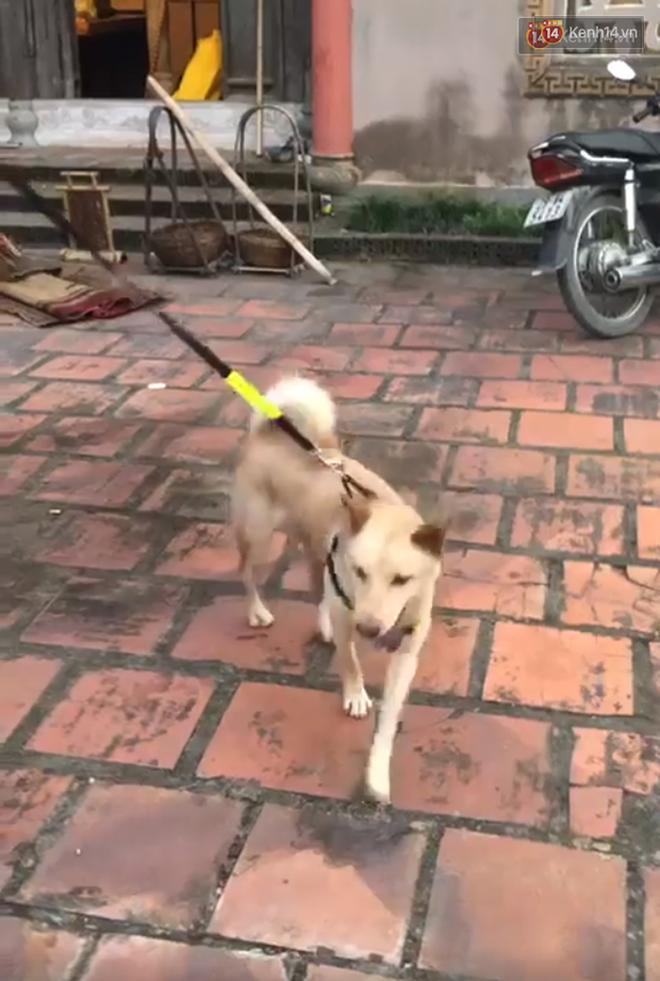 Cậu Vàng tung first look giới thiệu sinh vật lạ: Vẫn là chó Nhật nhưng lông đỏ, hàng siêu hiếm? - ảnh 8
