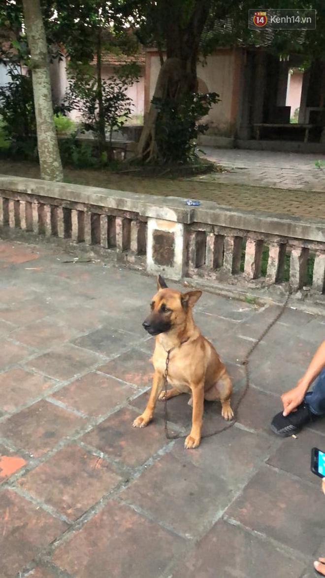 Cậu Vàng tung first look giới thiệu sinh vật lạ: Vẫn là chó Nhật nhưng lông đỏ, hàng siêu hiếm? - ảnh 7