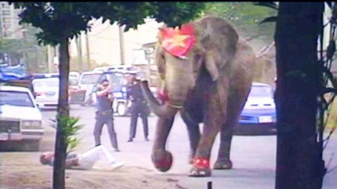 Đôi mắt đỏ rực, tứa máu của một con voi thức tỉnh cả nhân loại: 20 năm chịu cảnh tù đày thống khổ và 87 phát đạn rung chuyển cả thế giới - ảnh 7