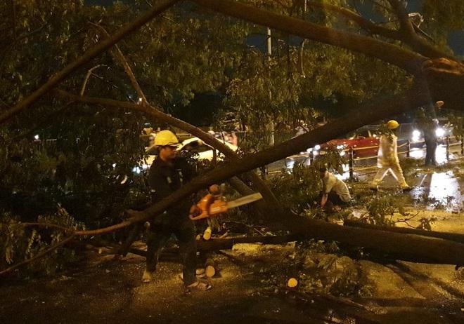 Mưa to gió lớn như bão, hàng chục cây xanh bật gốc ở Sài Gòn - ảnh 8