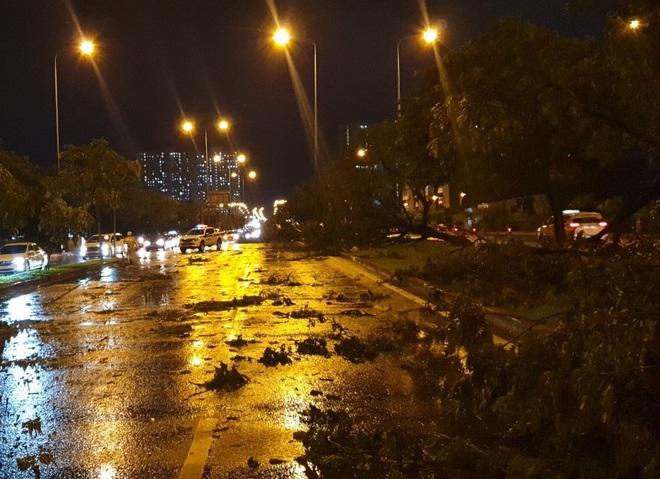 Mưa to gió lớn như bão, hàng chục cây xanh bật gốc ở Sài Gòn - ảnh 1