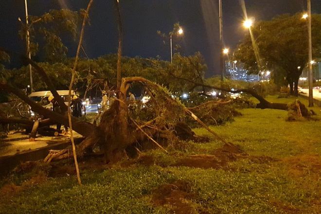 Mưa to gió lớn như bão, hàng chục cây xanh bật gốc ở Sài Gòn - ảnh 7