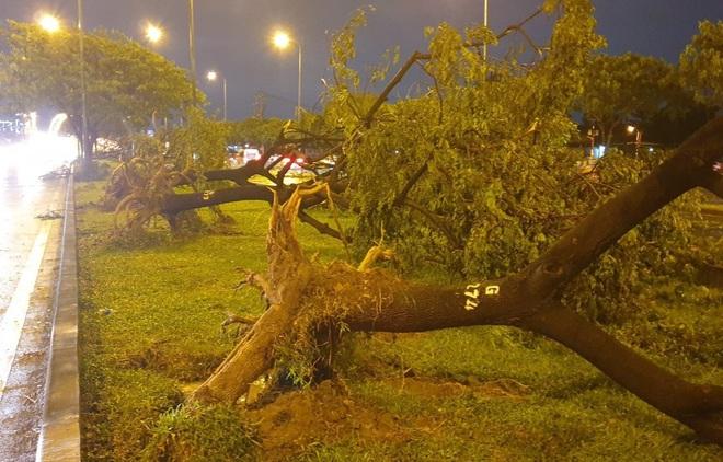Mưa to gió lớn như bão, hàng chục cây xanh bật gốc ở Sài Gòn - ảnh 2