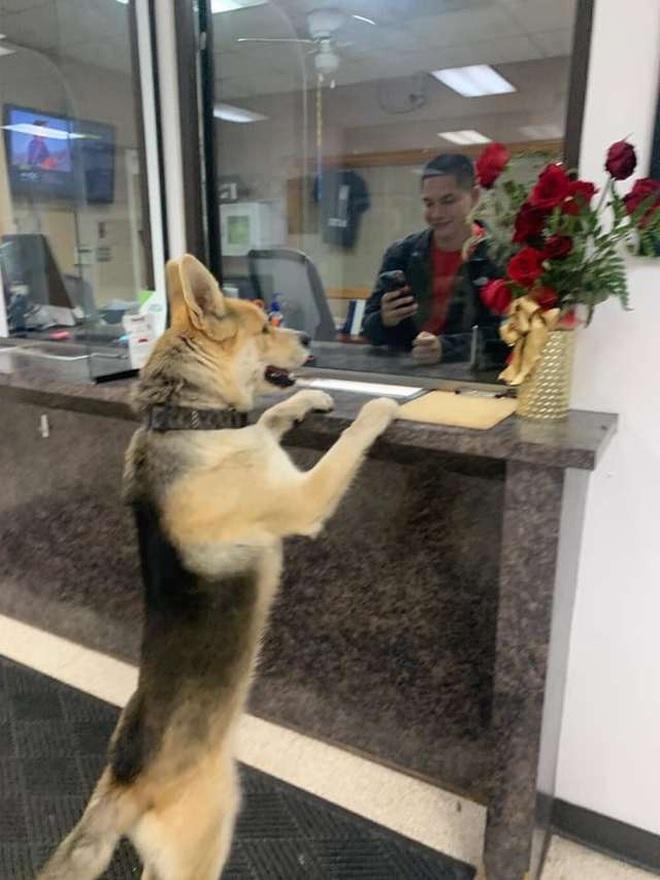 Nửa đêm, chú chó lạ tự bước vào sở cảnh sát để báo án về vụ mất tích của...chính mình - Ảnh 1.