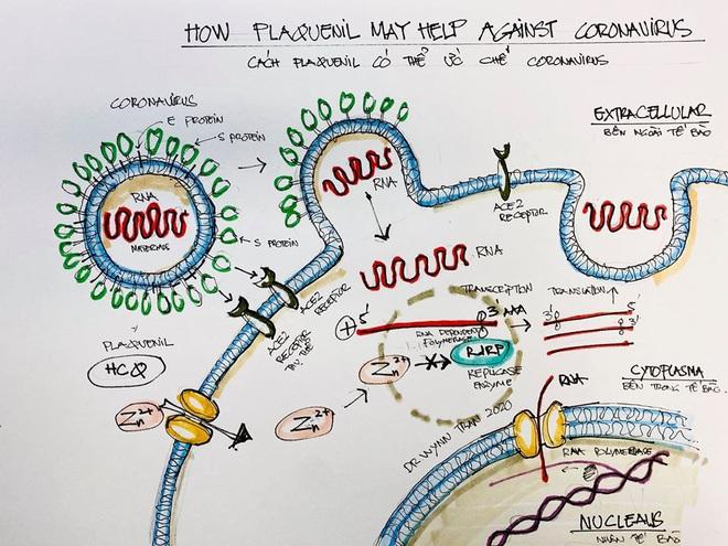 Chuyên gia giải đáp: Vì sao thuốc Plaquenil có thể hiệu quả trong việc chữa trị Covid-19? - Ảnh 2.