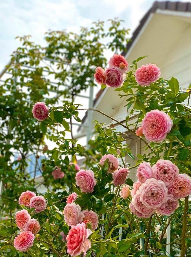 Con gái MC Quyền Linh lại gây thương nhớ khi xuất hiện trong biệt thự vườn ngập hoa trái được định giá 21 tỷ - ảnh 10
