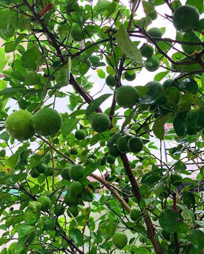Con gái MC Quyền Linh lại gây thương nhớ khi xuất hiện trong biệt thự vườn ngập hoa trái được định giá 21 tỷ - ảnh 9