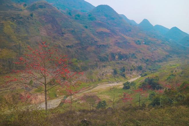 Hà Giang tháng 3 đẹp mê hồn trong mắt cô gái trẻ xứ Thanh, thật khó tin khi 4 loài hoa núi rừng đủ sắc màu cùng nở một lúc - Ảnh 4.