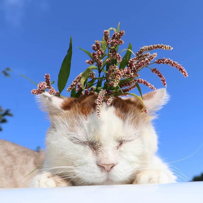 """Chú mèo Shironeko huyền thoại đã qua đời, gia đình chọn đúng ngày """"sinh nhật"""" 18 tuổi để công bố tin buồn - Ảnh 3."""