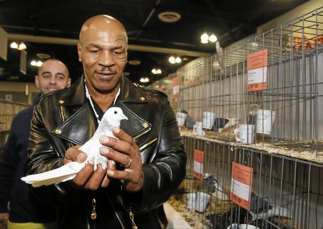 Mike Tyson và sợi dây liên kết khó tin với những chú chim bồ câu: Là mối tình đầu, là cứu cánh trong giai đoạn tăm tối mà chỉ muốn giết người - ảnh 1