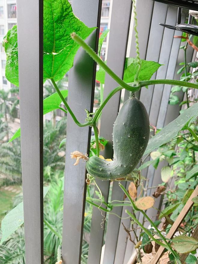 Không yêu bếp cũng chẳng nghiện nhà là do tôi, nhưng đến trồng trọt cũng dặt dẹo thì chắc chắn do cây rồi - Ảnh 7.