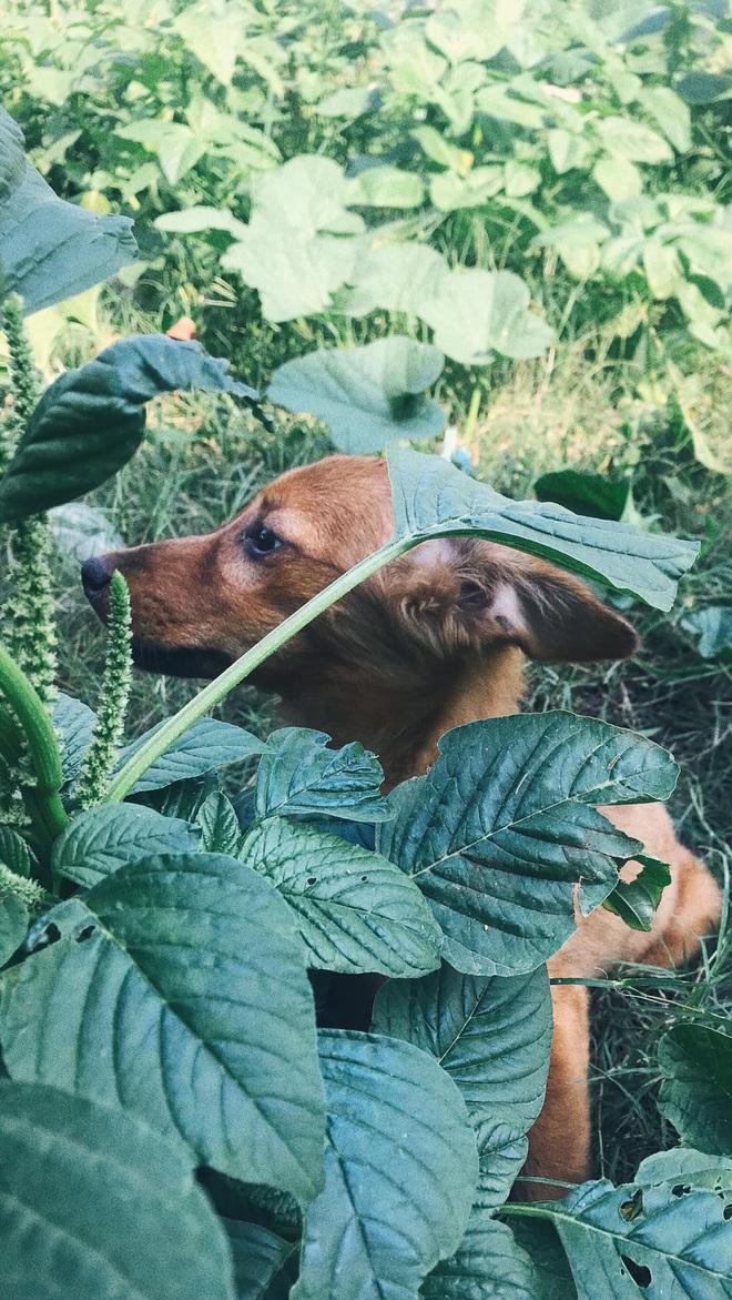 """Cô nhân viên văn phòng nuôi đàn chó ta 9 con: Ai cũng bảo chó cỏ không đẹp không được cưng, thì tui cưng!"""" - ảnh 8"""