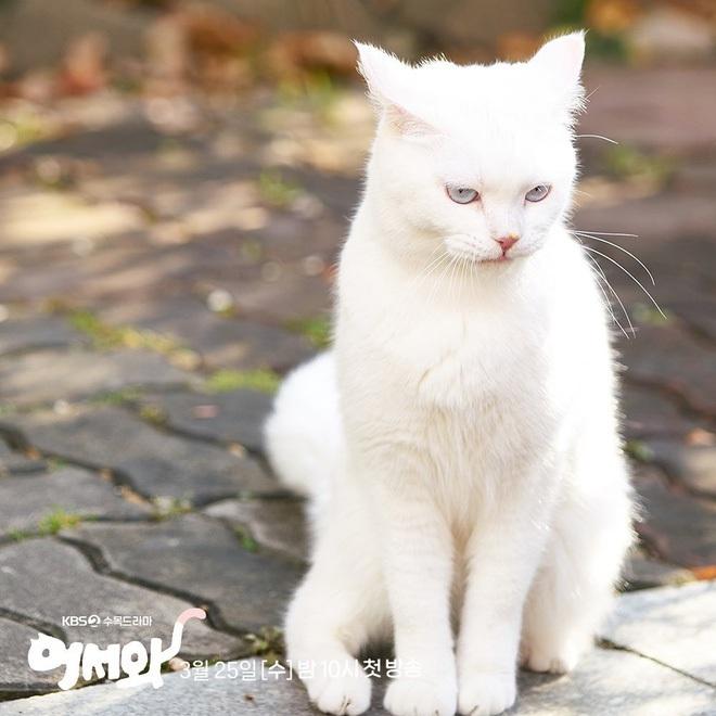 Meow, the Secret Boy ăn điểm fan Kpop vì đem fanfic mèo hóa người ra đời thực, thêm cả combo mỹ nam cực phẩm đóng chính? - ảnh 2