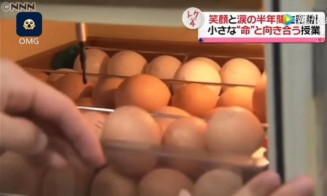 Lớp học ở Nhật gây phẫn nộ vì bắt học sinh giết mổ và ăn thịt con vật do chính tay mình nuôi - ảnh 5