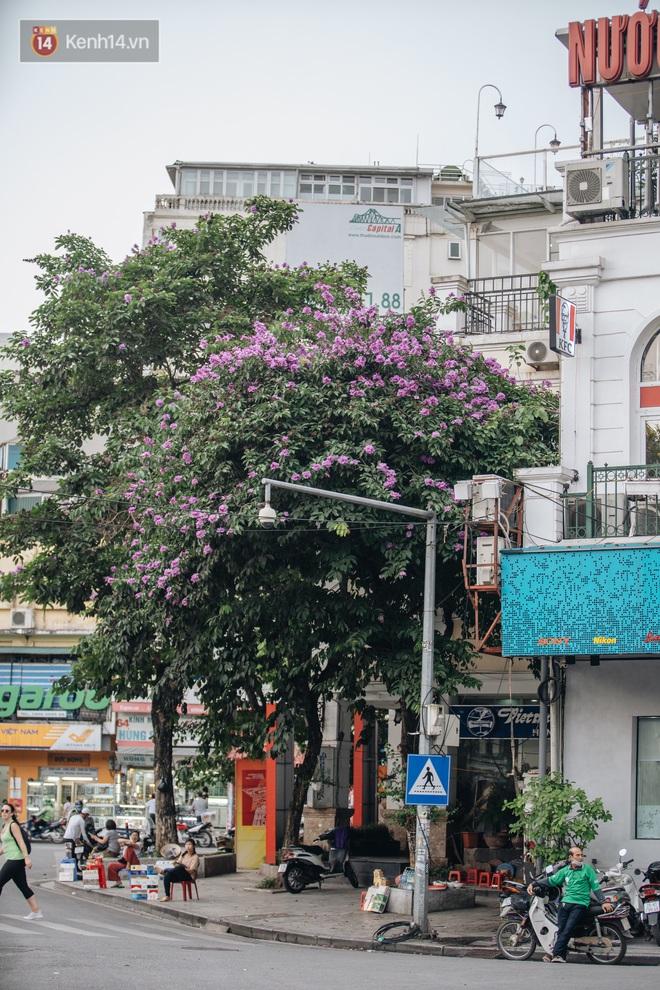 Ảnh, clip: Hoa bằng lăng nhuộm tím phố phường Hà Nội tháng 5 - Ảnh 8.