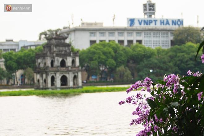 Ảnh, clip: Hoa bằng lăng nhuộm tím phố phường Hà Nội tháng 5 - Ảnh 3.