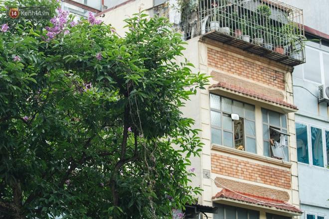 Ảnh, clip: Hoa bằng lăng nhuộm tím phố phường Hà Nội tháng 5 - Ảnh 12.